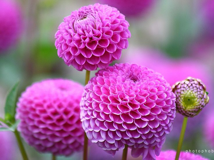 33 best fleurs images on pinterest