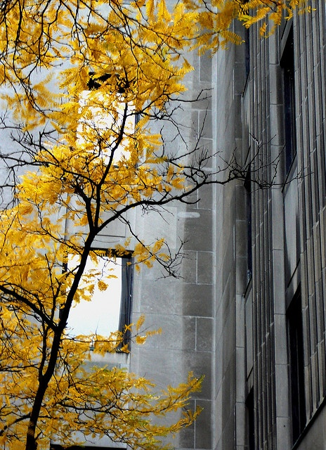 fall is back. yellow & grey