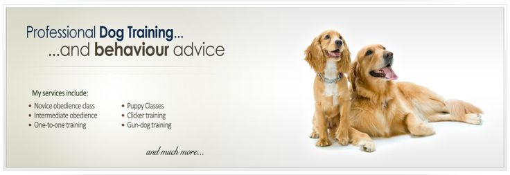 CD Dog Training - dog trainer in norfolk, dog trainer in norwich, dog trainer in wymondham, dog classes in norfolk, dog behaviourist norfolk, dog classes in norfolk, clicker training norfolk, puppy classes wymondham, puppy socialisation norfolk, puppy classes norwich, gun dog training norfolk