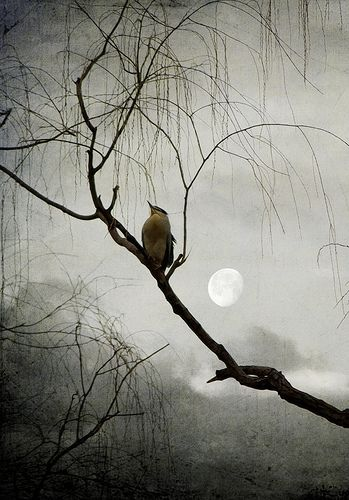 bird singing to the moon