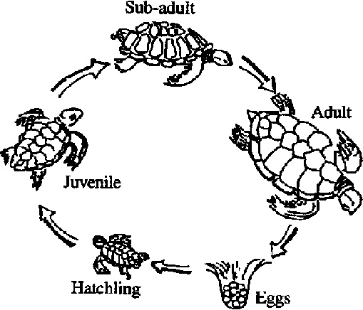 278 best images about Sea turtles on Pinterest | Easy crafts for ...