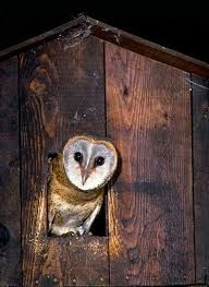 21 best images about owl boxes on Pinterest
