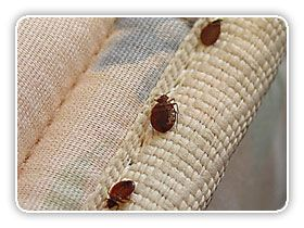 Reduce clutter to make bed bug inspection easier. Be careful when removing items from the infested area to other areas because you may transfer the bed bugs.
