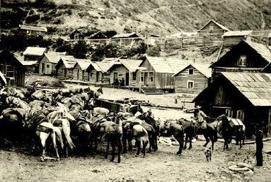 Pack train at Telegraph Creek, c. 1898. Photo: British Columbia Archives