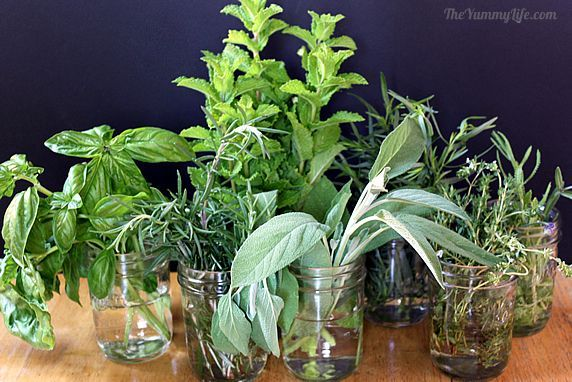 fresh herbs  Mint is the most obvious herb choice, but try basil, rosemary, sage, thyme, lavender, and tarragon too.
