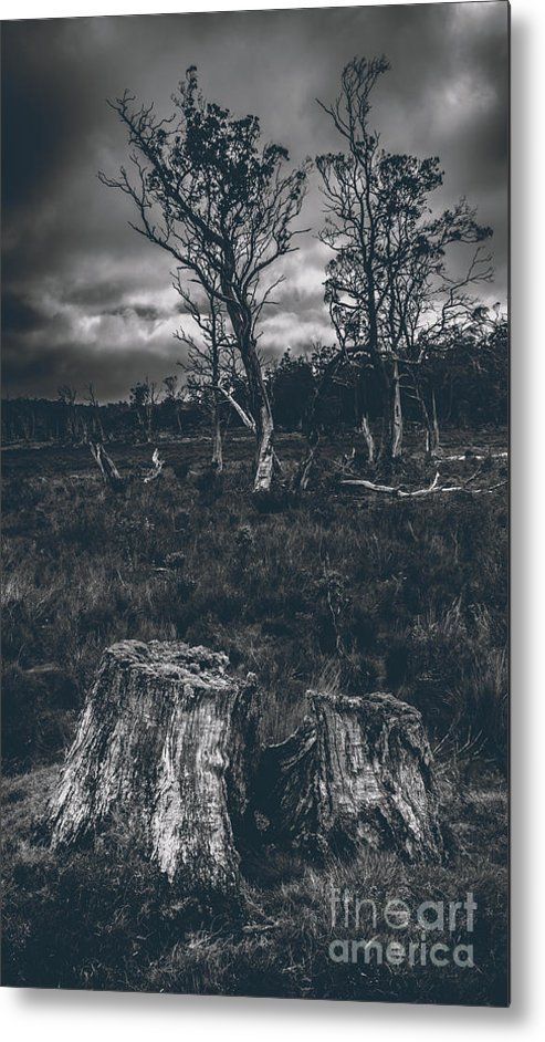 Woods Metal Print featuring the photograph Landscape Of A Dark Creepy Australian Woodland by Jorgo Photography - Wall Art Gallery