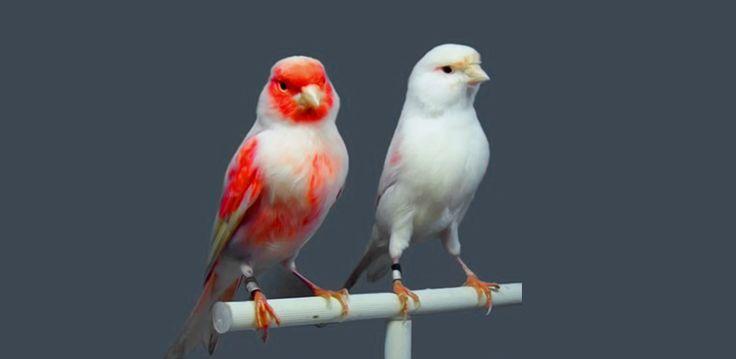 تأويلات ابن سيرين لتفسير حلم العصافير موقع مصري In 2021 Animals Bird