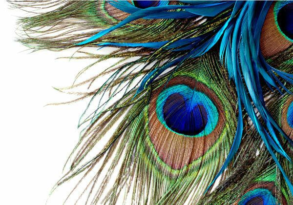 Peacock Feather Clipart Art 3d Full Wall Mural Photo Wallpaper Home Decal Kids Ebay Feather Wallpaper Peacock Wallpaper Wall Murals