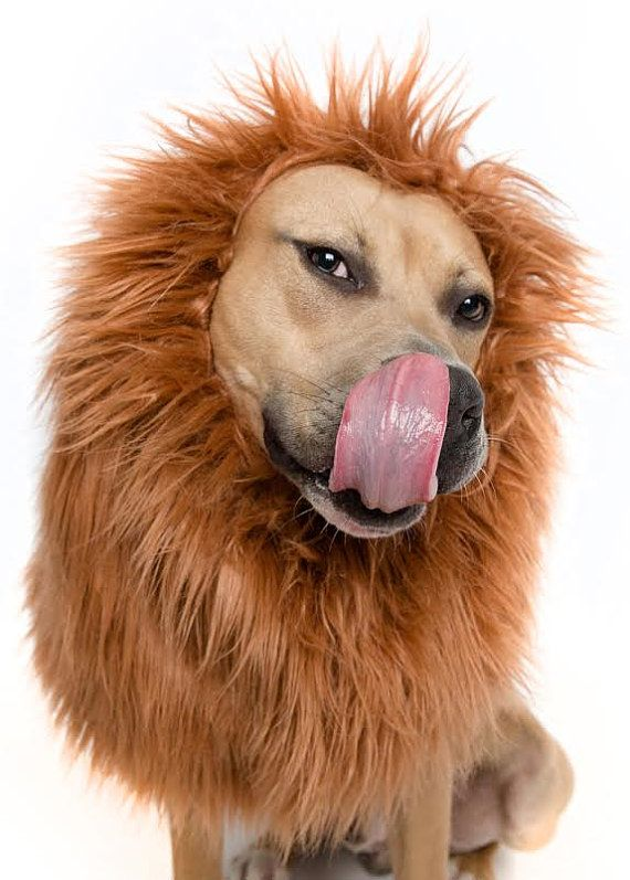 Lion Mane Wig for Large Dog Costume by PetKrewe on Etsy