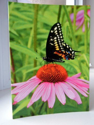Birthday card, photo greeting card,nature photography,Christian greeting card,Birthday card,Butterfly card at Designs by Willowcreek on Etsy by DesignsByWillowcreek on Etsy