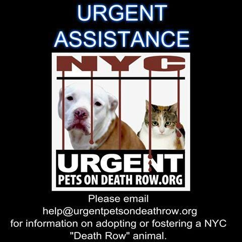 Please help us keep our dogs safe, and keep our threads open to public comment, by encouraging interested parties to reach out to help@UrgentPetsOnDeathRow.org   **If possible, please include a link to the dog's picture in your email.** Our dedicated, approved help desk crew will do their best to guide potential foster/adopters through the process of saving a NYC ACC dog, while also keeping in mind that yes, there are worse fates than ACC...