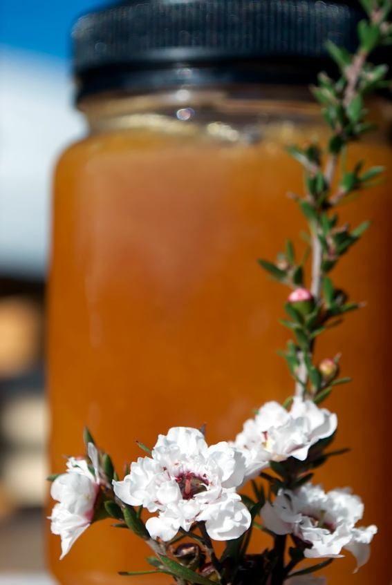 17 Life Changing Reasons You Need A Jar Of Manuka Honey