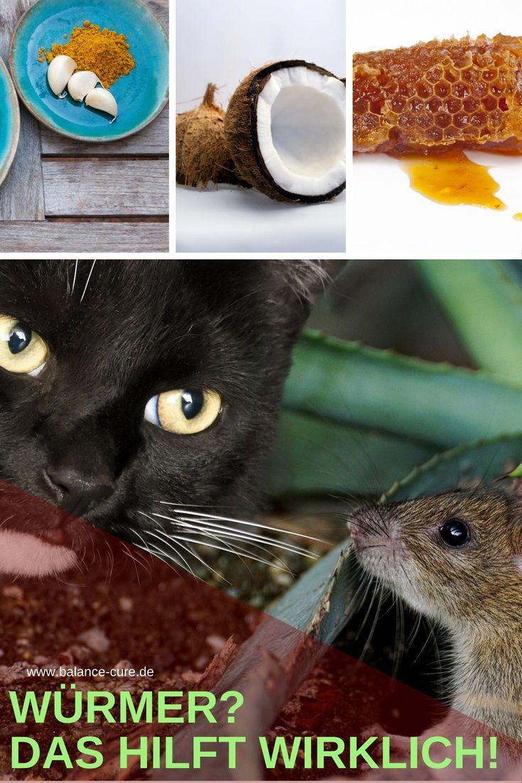 Darmparasiten Naturlich Wieder Loswerden Katzen Futter Katze Wurmer