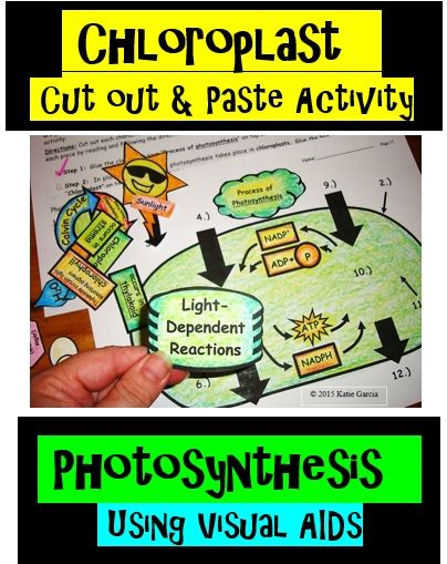 210 best science photosynthesis cellular respiration images on chloroplast cut out and paste activity for photosynthesis students will cut out and color characters involved in the process of photosynthesis and then ccuart Gallery