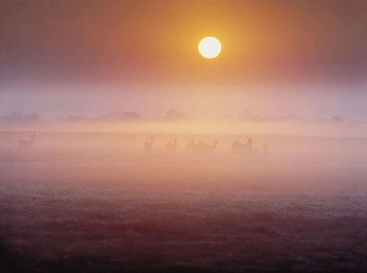Sunrises and sunsets are Zambia's showstoppers. Here, the curtain rises on the Busanga Plains, in Kafue National Park. The animals are lechwe.