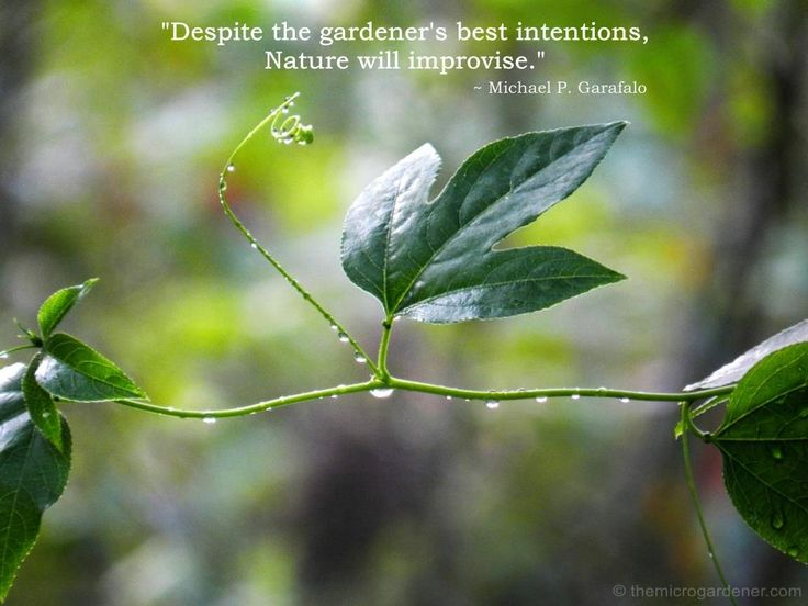 Despite the gardener's best intentions, Nature will improvise. More tips @ themicrogardener.com