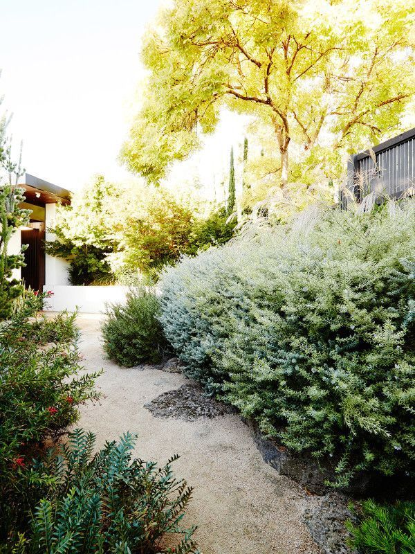 A meandering decomposed granite pathway is flanked by native shrubs such as coastal rosemary (Westringia spp.), Grevillea and Banksia species. Photo – Annette O'Brien for The Design Files.