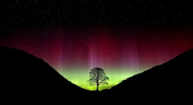 Amazing colours as the Northern Lights put on a display at Sycamore Gap on gadrians wall in Northumberland famous for teh tree that featured in the Robin Hood prince of thieves movie.....PA Photo Owen Humphreys.