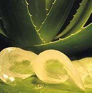 Aloe Vera contra el Cáncer Tratamiento para curar del Cáncer  La presente receta natural para curar el Cáncer,