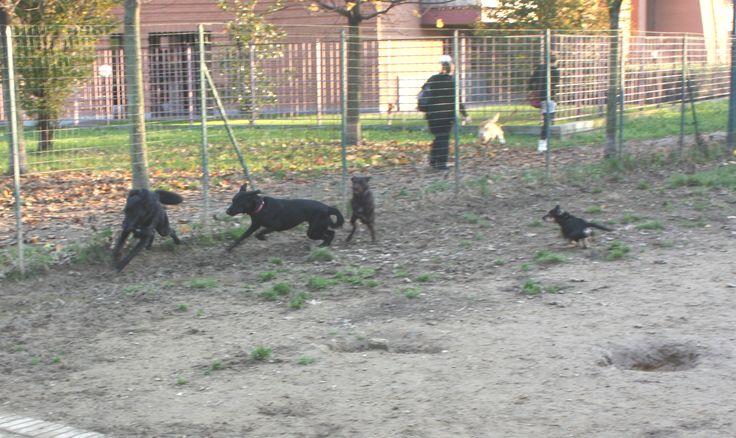 20/11/2014 - Torino con Peja, Ollie e Bobby