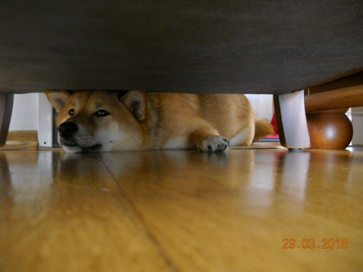 """You can hide, but I still see you. """"Ringo Kun"""""""