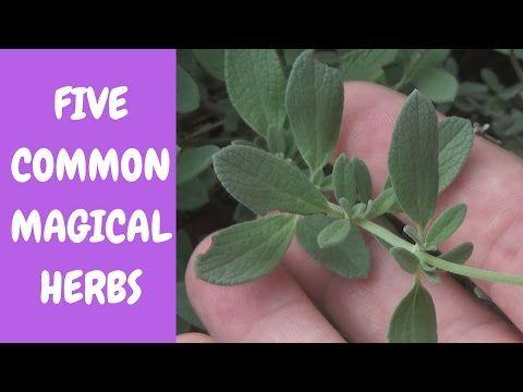 5 COMMON GARDEN HERBS TO USE IN SPELLS - YouTube