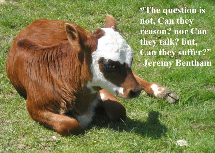 slaughterhouse the shocking story of greed pdf