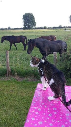 Wauw paardjes