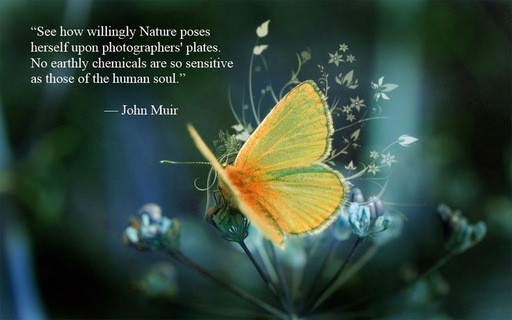 Uplifting thoughts from the great naturalists to deepen your experience of nature