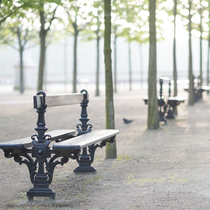 Dawn, Jardin du Luxembourg, Paris by Georgianna Lane