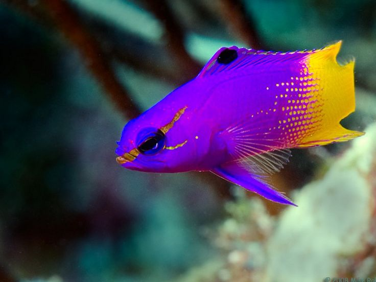 Beautiful fish google search somethin 39 fishy for Beautiful fish pictures