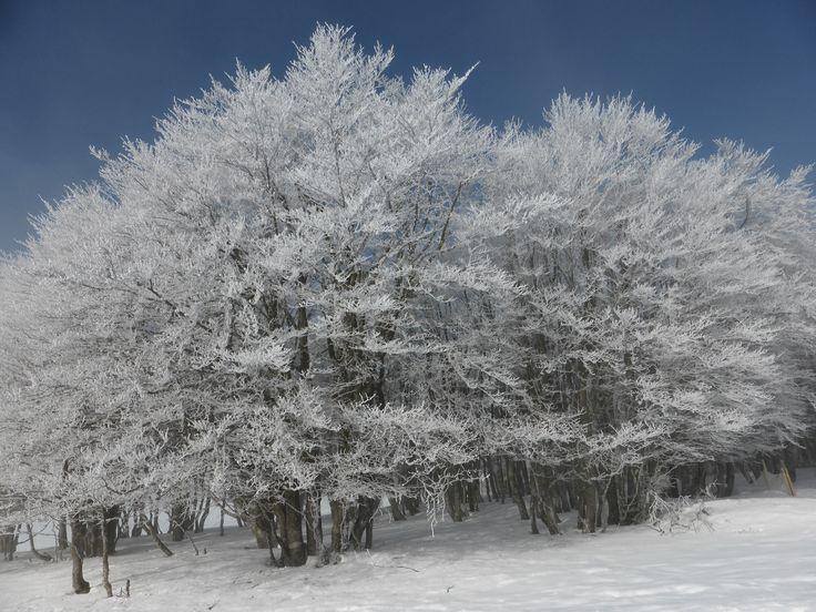 """Sortie raquette en groupe avec un guide accompagnateur du bureau """"Montagne Hautes Vosges"""". Paysages enneigés au petit matin dans les Vosges en hiver. Ambiance magique avant l'arrivée du soleil. #Lorraine #vacances #Vosges #raquettes #tourisme #neige #paysage"""