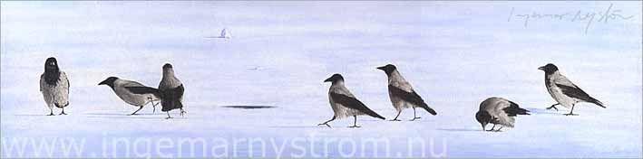 sju kråkor på isen
