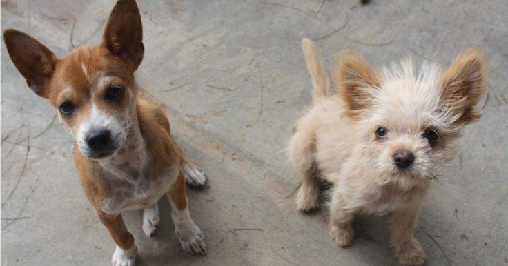 Perros y gatos callejeros tirados. Que se cree área protegida para animales. APOYA Y COMPARTE...
