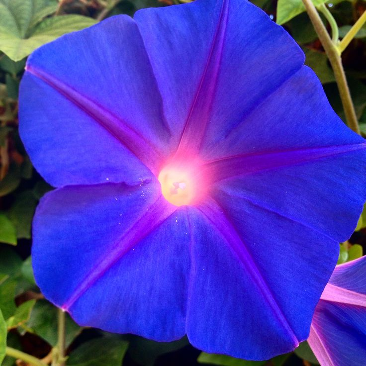 Amazing Blue Flower ....#Armata #Boutiquehotel in #Spetses Island Greece