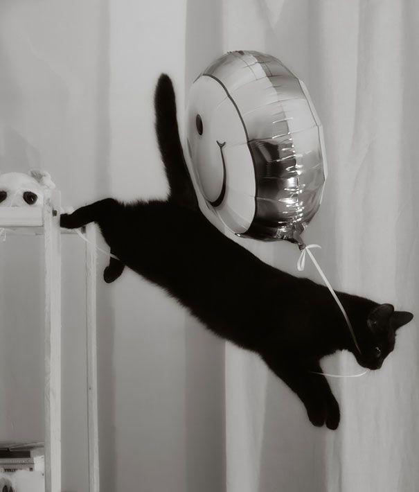 Chaton noir qui vole des ballons