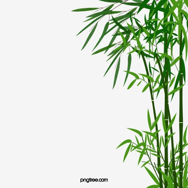 Cartoon Bamboo Png And Psd Bamboo Background Fruits Drawing Tape Wall Art