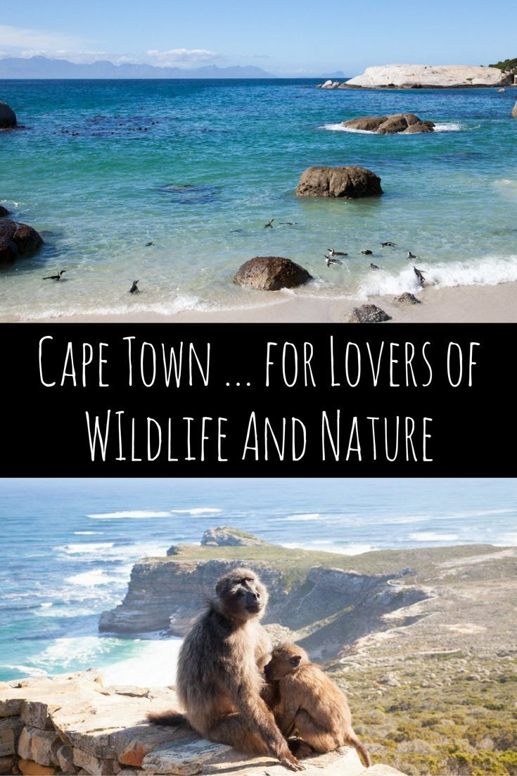 Cape Town for lovers of nature and wildlife via christineknight.me