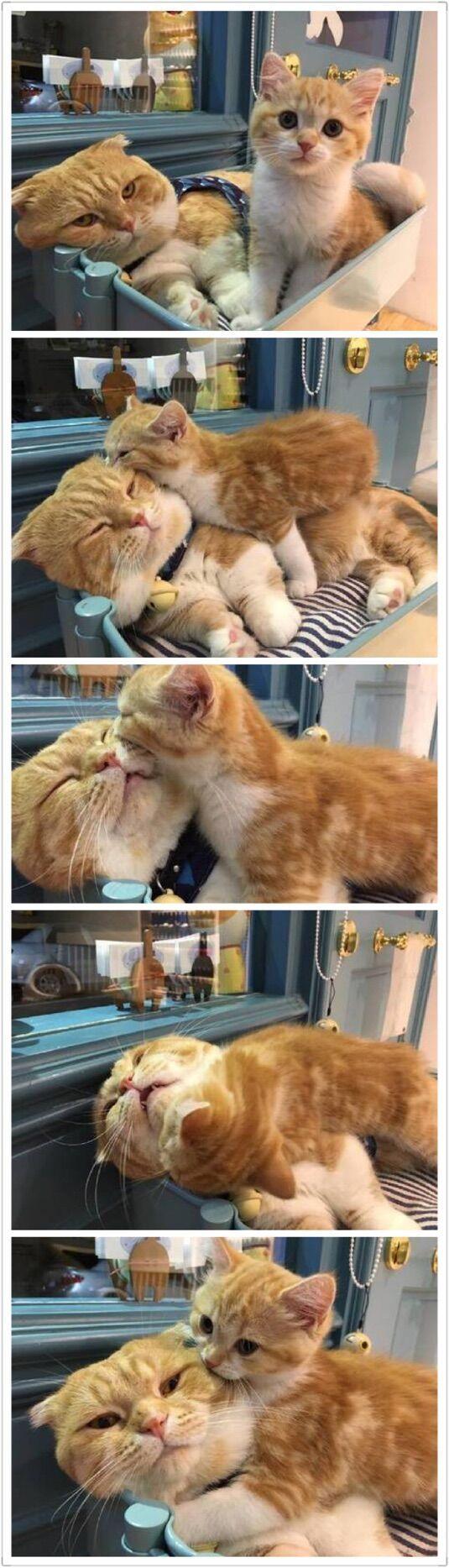 17 Terbaik Ide Tentang Anak Kucing Di Pinterest Anak Kucing