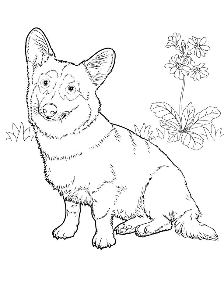 these free dog coloring pages make for a fun quiet time project for both children and adults coloring is a proven stress reliever and these dog coloring