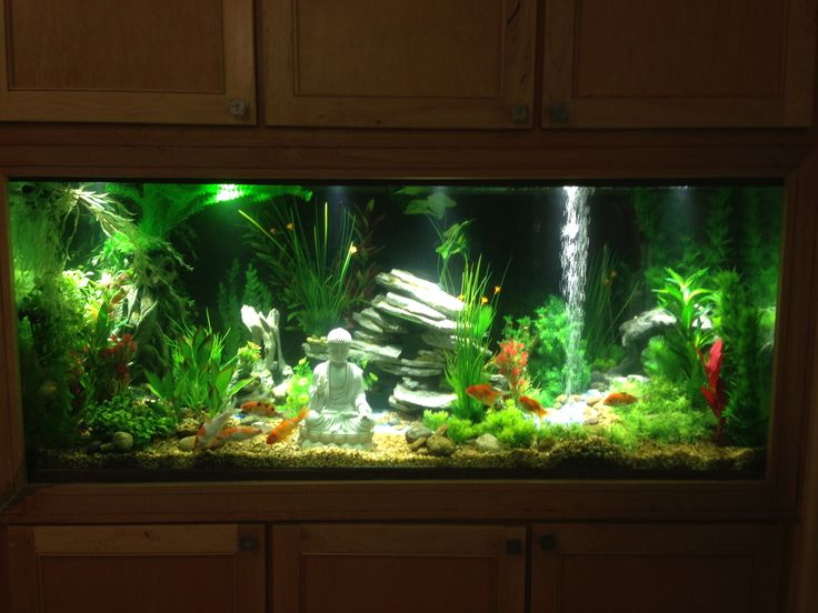 1000 images about freshwater aquarium ideas on pinterest for Fish tank caves