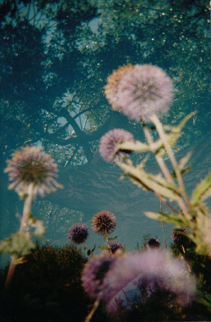 puuffPhotos, Magic, Inspiration, Purple, Nature, Flora, Perspective, Dandelions, Flower Types