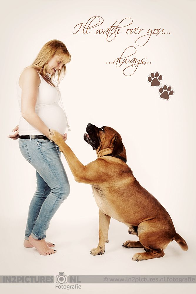 Pregnancy photography with dog - in2pictures photography  Zwangerschapsfotografie  www.in2pictures.nl
