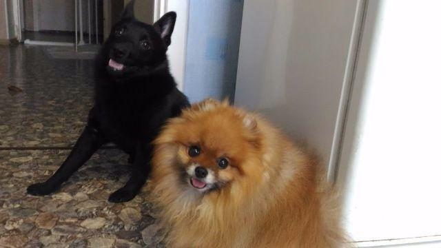 Про агрессию у маленьких собак: about_dog