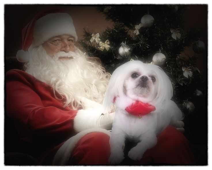 Book a Christmas Pet Studio Session Port Macquarie www.jjfphotography.com.au