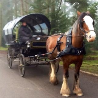 Centre parcs horse and cart