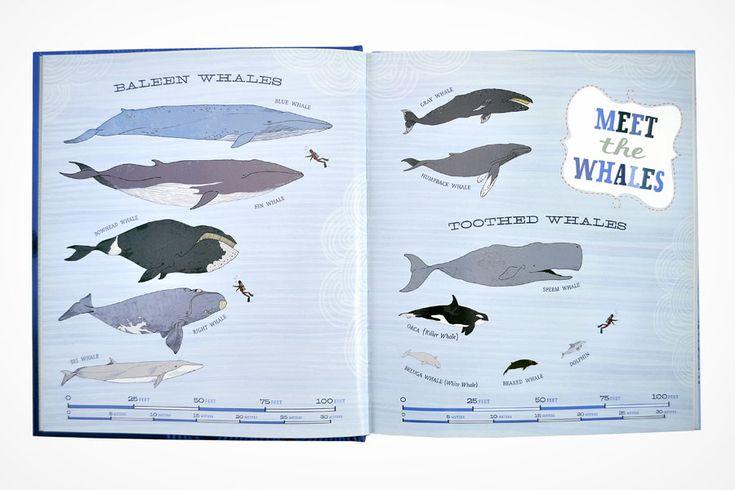 Molly E Baker - Secret World of Whales