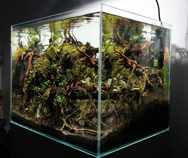 Aquascape Riums Pinterest Acuario Y Jardiner 237 A