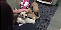 L'instant meugnon : une chienne abandonnée sort de sa tétanie en retrouvant ses petits