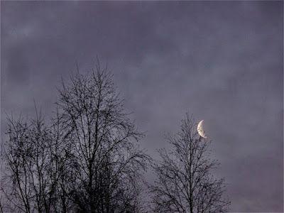 Portfolio Multimedeia: Moon in the morning in Lapland